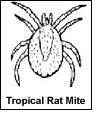 Mites Affecting Humans