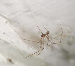 Spiders | IDPH