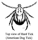 hard tick (american dog tick)