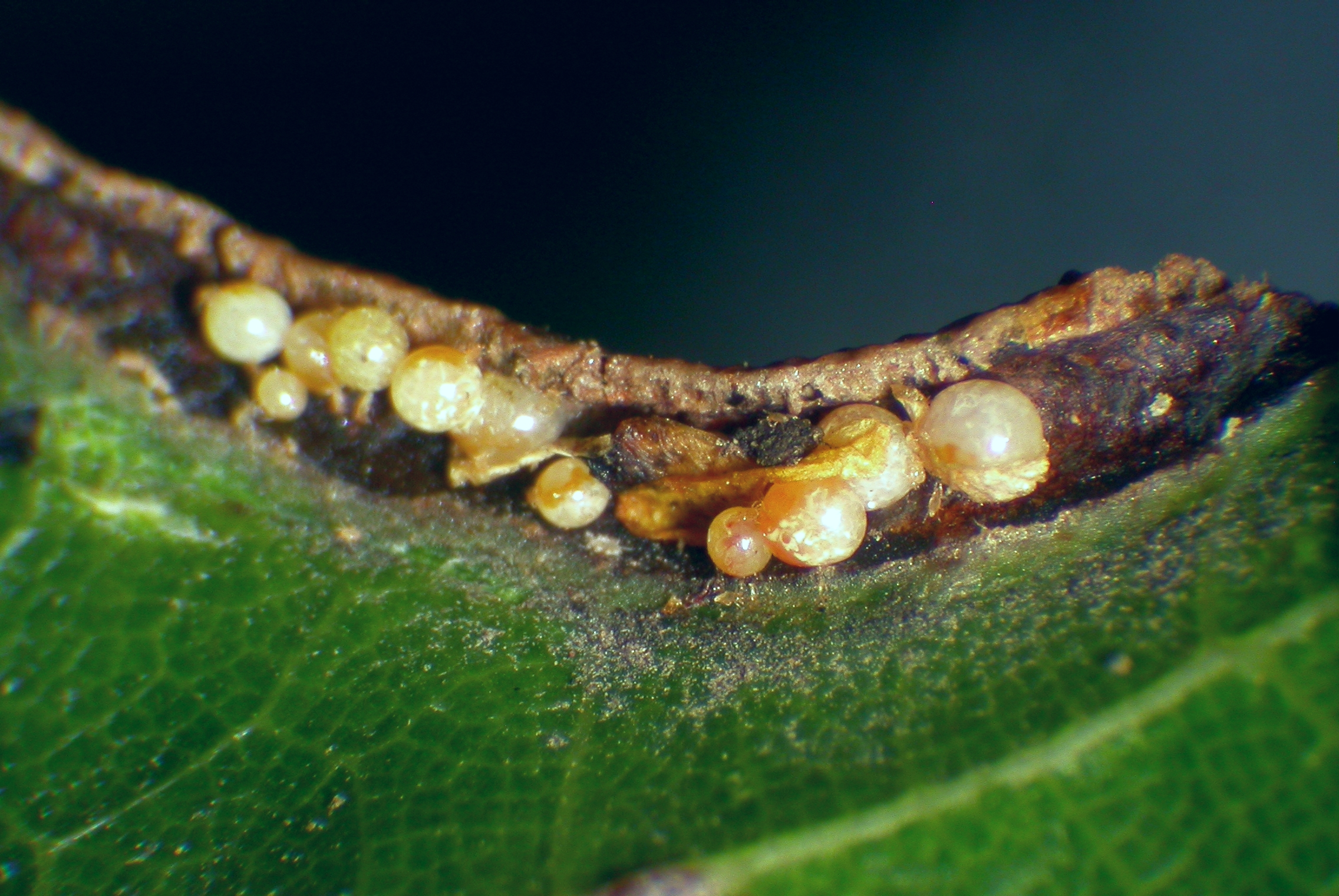 Itch Mites Prevention and Control